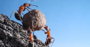 Is This You? Struggling With A Scary Challenge? Get Expert Help … From An Ant