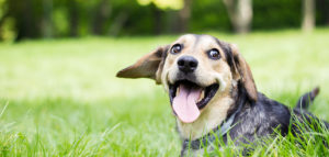 Summertime Ayurveda for Dogs: 6 Ways to Keep Your Pup Healthy This Season