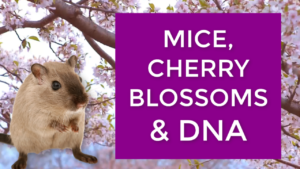 What Do Mice And Cherry Blossoms Have To Do With Your Prosperity?